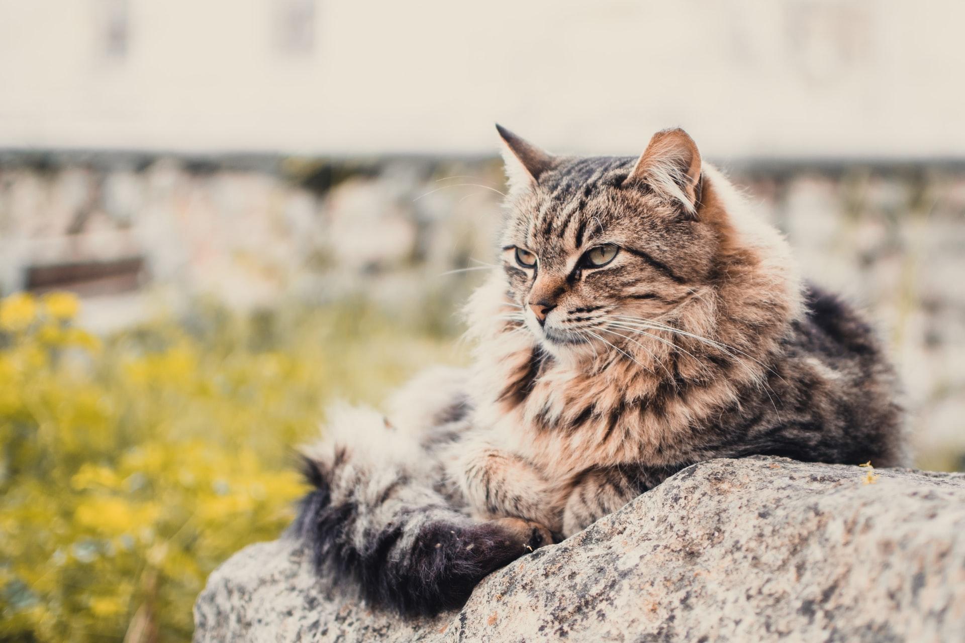 Kilka słów o kastracji kotów