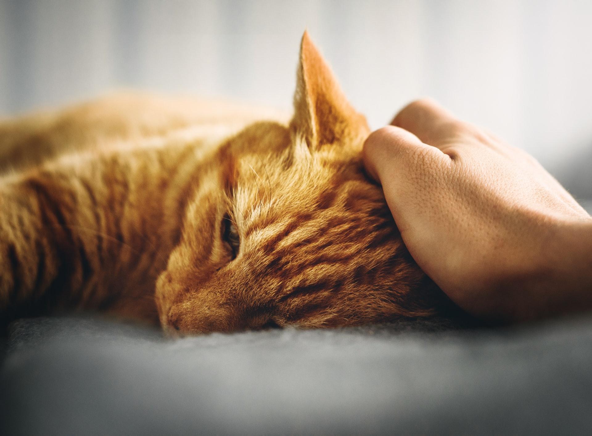 Choroby dolnych dróg moczowych kotów