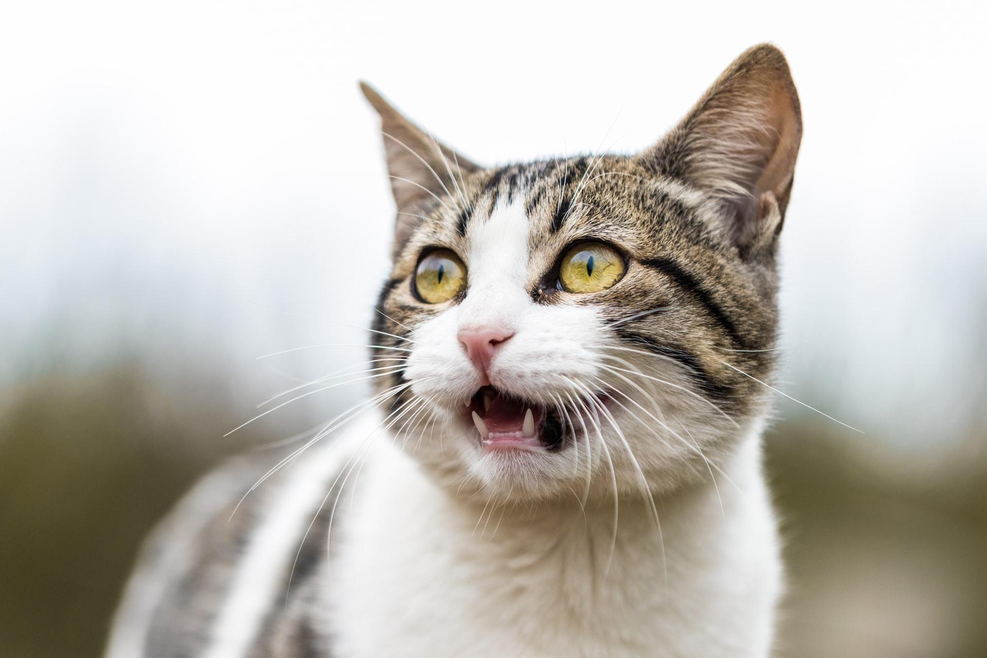 Gdy wymiotuje kot